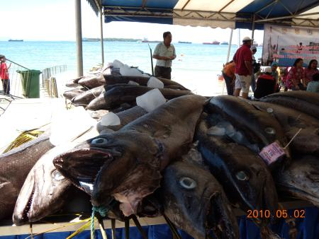 Labuan international fish caught