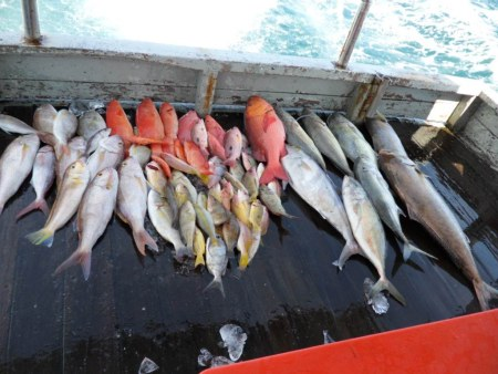 Fishes caught by anglers in Sabah