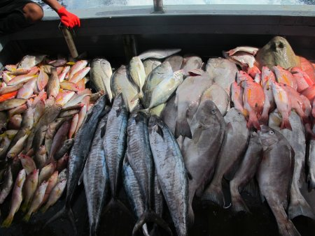 fishes caught in Sabah